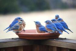 bird bath gang...cute