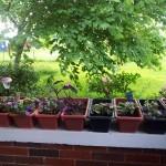 2012-Patio-Garden-Spring-150x150