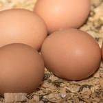fresh eggs (brown)