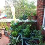 Patio-Gardening-2012-150x150